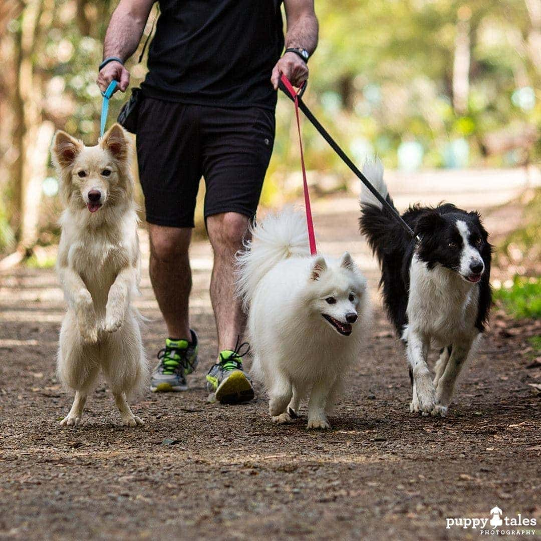 Pawsitive Travel With Dogs Adventure Hounds Going For A Run