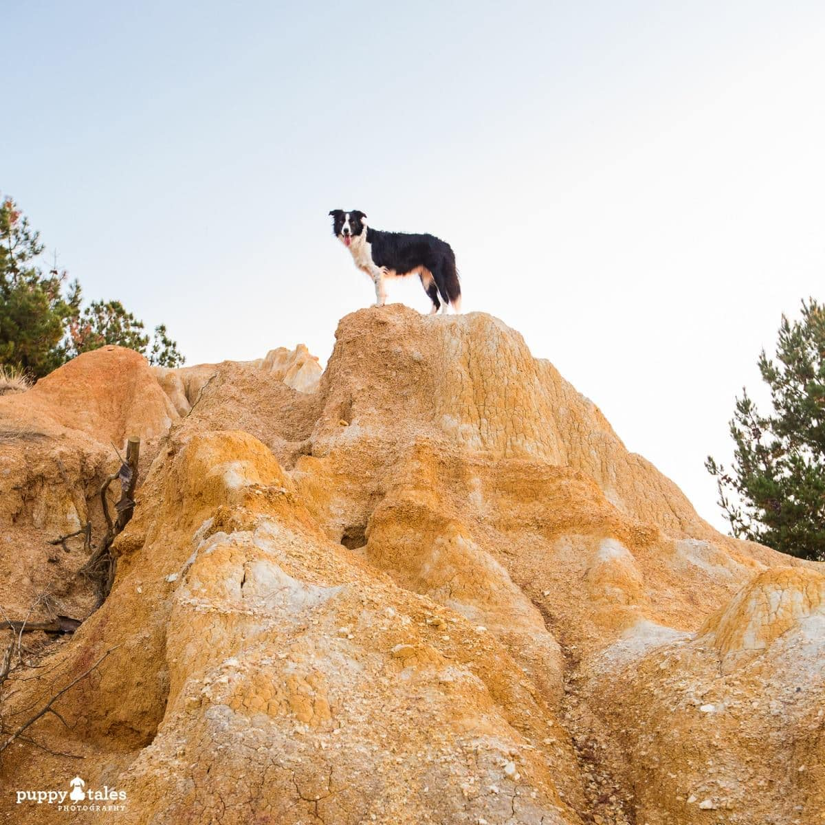 Pawsitive Travel With Dogs Hiking Roaming Rovers