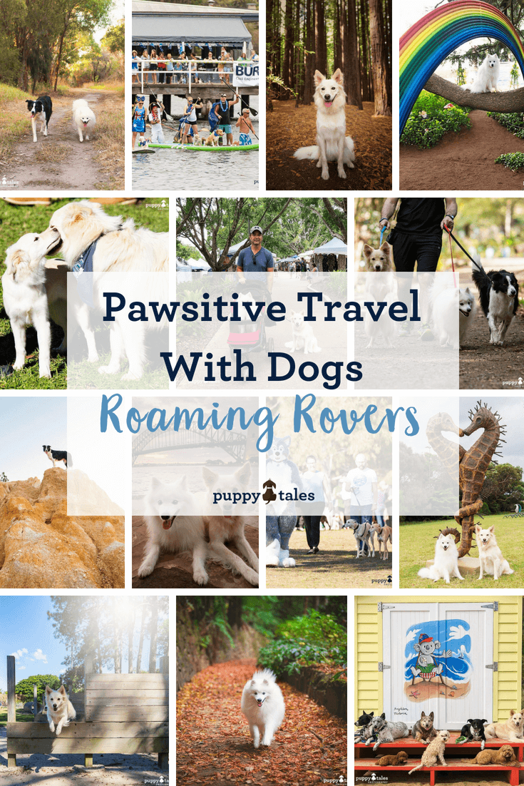 Pawsitive Travel With Dogs Romaing Rovers Pintrest