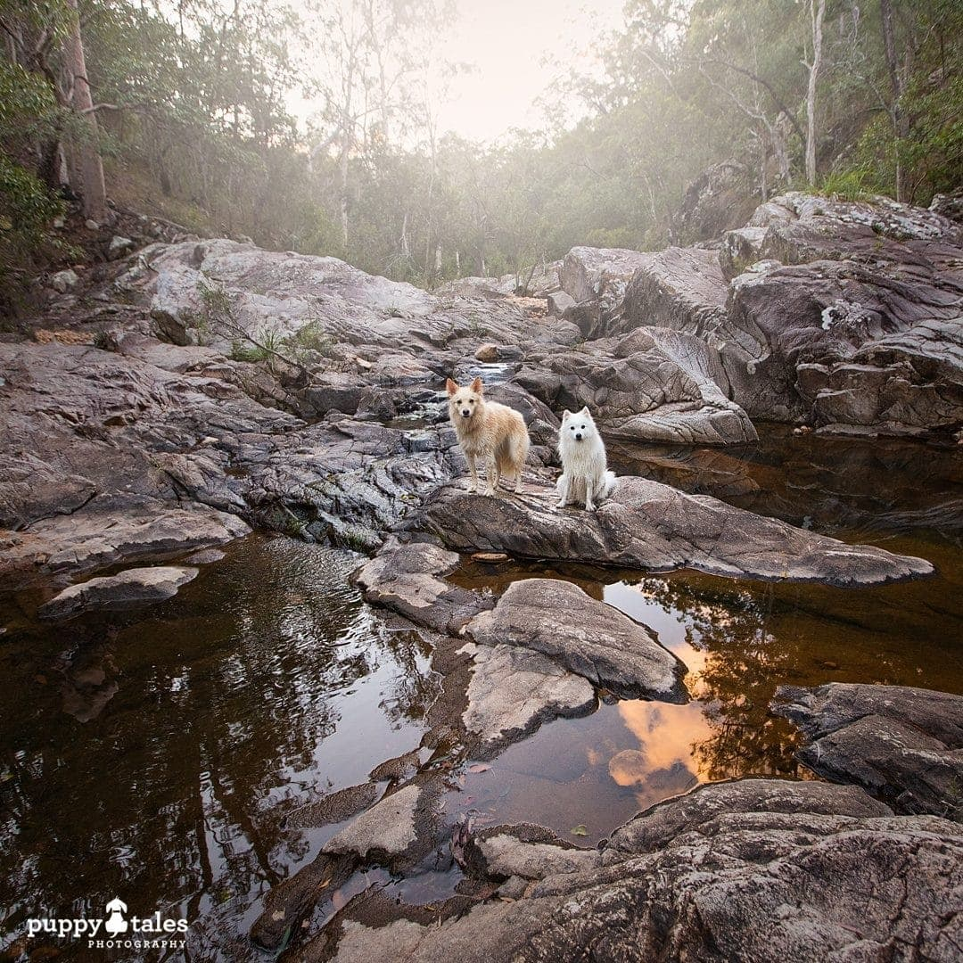 Pawsitive Travel With Dogs River & Rockpools Water Lovers