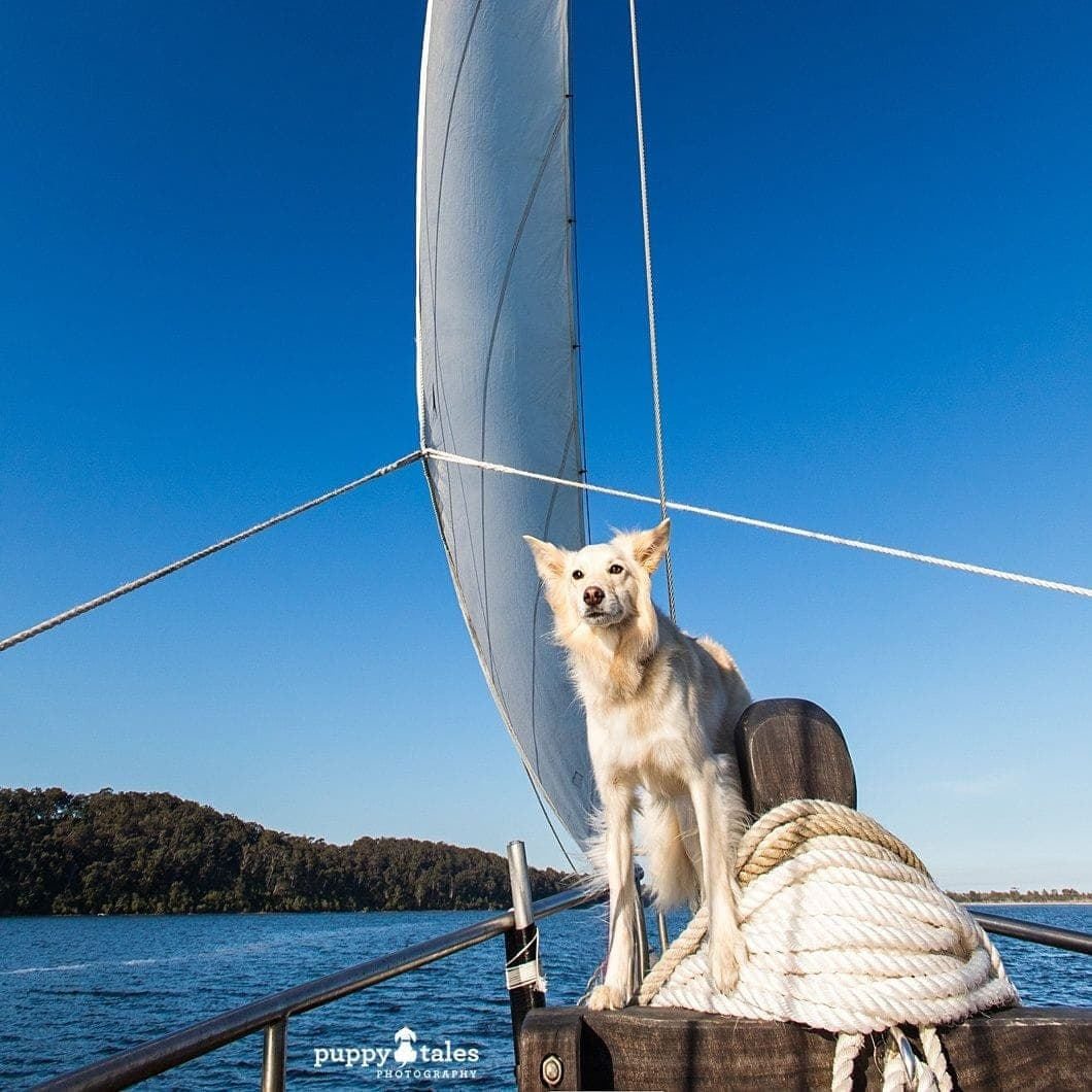 Pawsitive Travel With Dogs Sailing Water Lovers