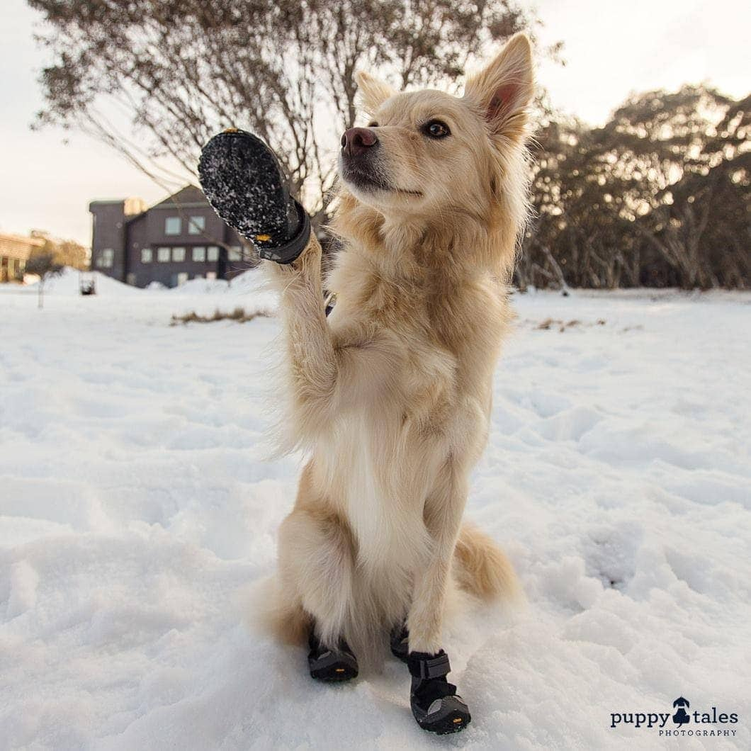 Pawsitive Travels With Dogs Adventure Hounds Snow Walks & Snowshoeing