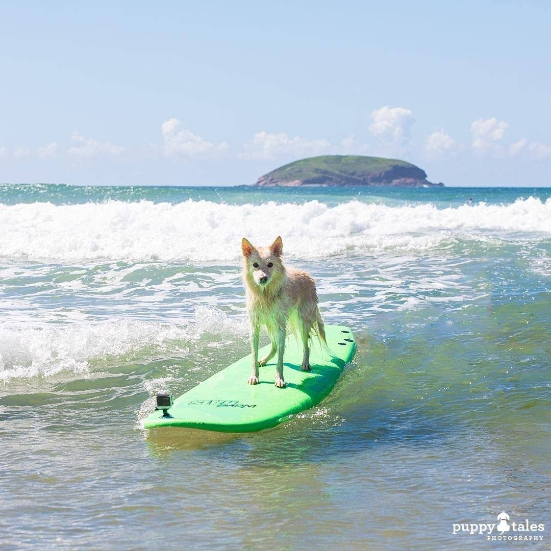 Pawsitive Travels With Dogs Adventure Hounds Surfing