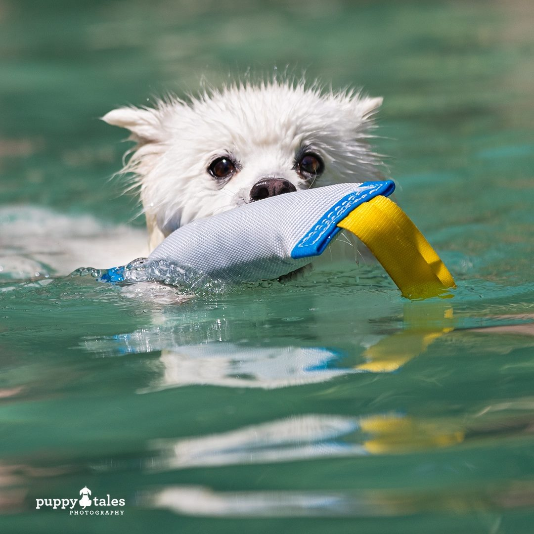 Pawsitive Travel With Dogs Adventure Hounds Swimming