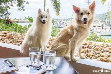 Dog Friendly Cafe Airlie Beach Feature