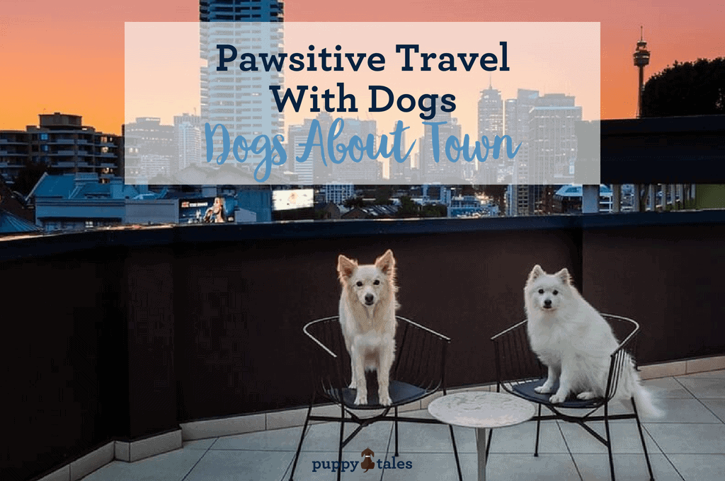 Pawsitive Travel With Dogs Dogs About Town Title