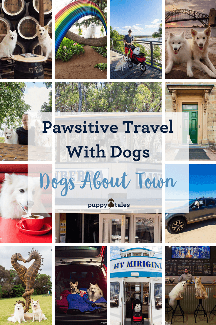 Pawsitive Travel With Dogs Dogs About Town Pintrest