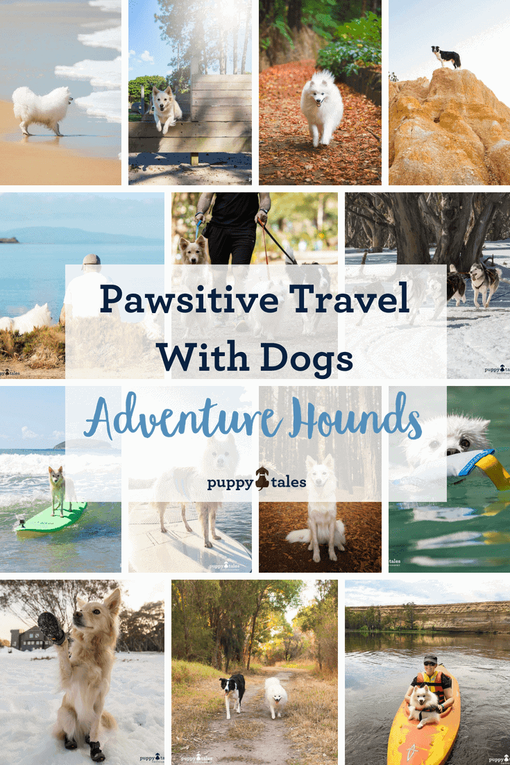Pawsitive Travel With Dogs Adventure Hounds Pintrest
