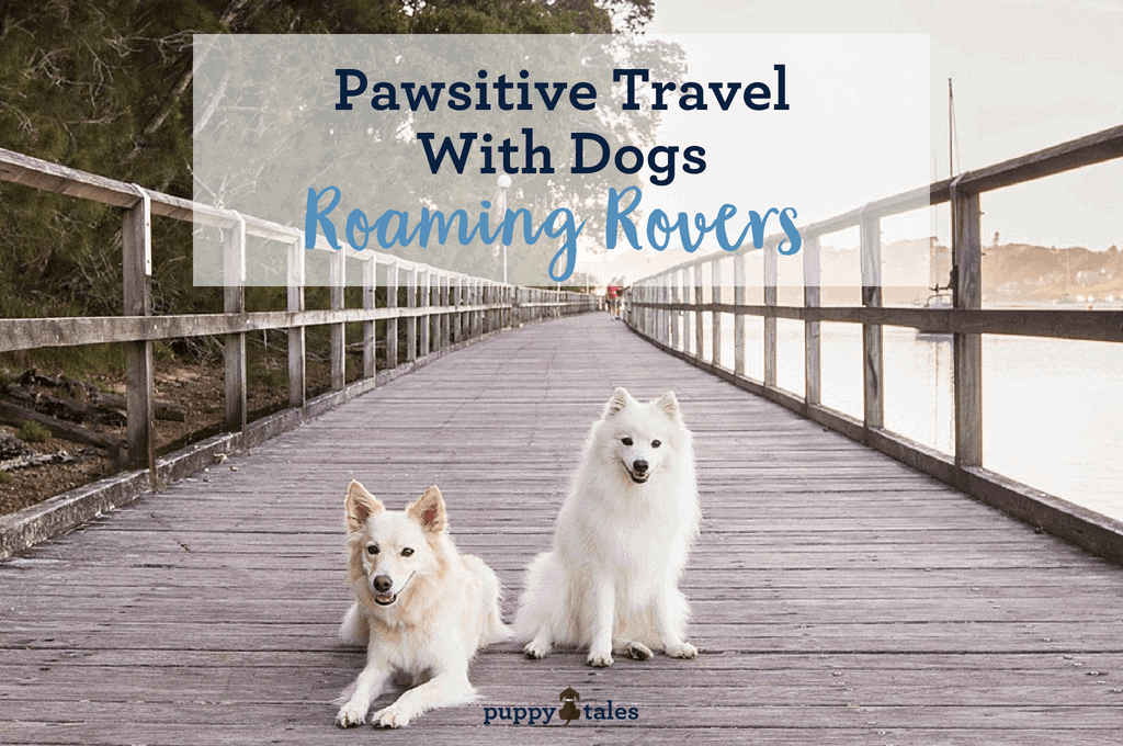 Pawsitive Travel With Dogs Roaming Rovers Title