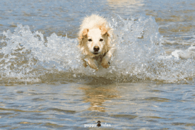 Pawsitive Travel With Dogs Water Lovers Feature