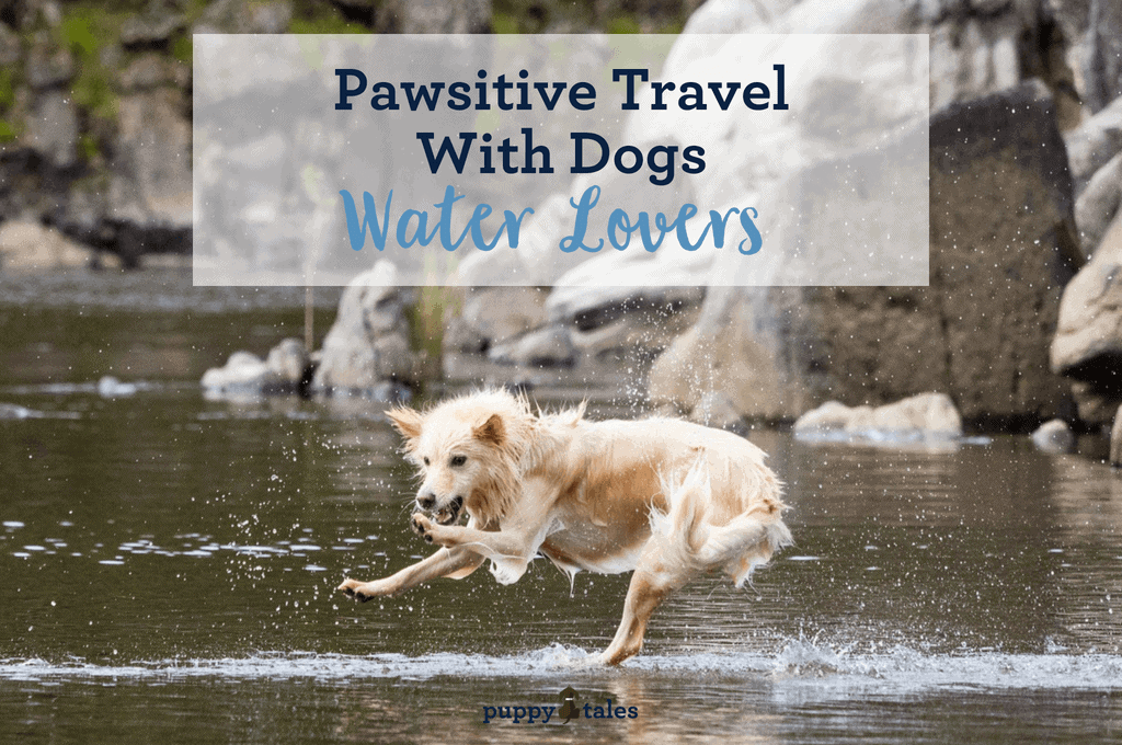 Pawsitive Travel With Dogs Water Lovers Title