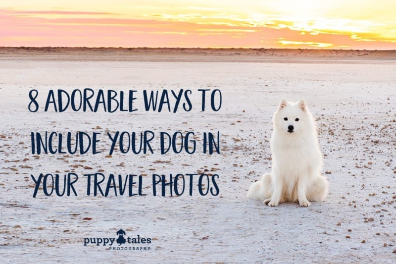 dog travel photos