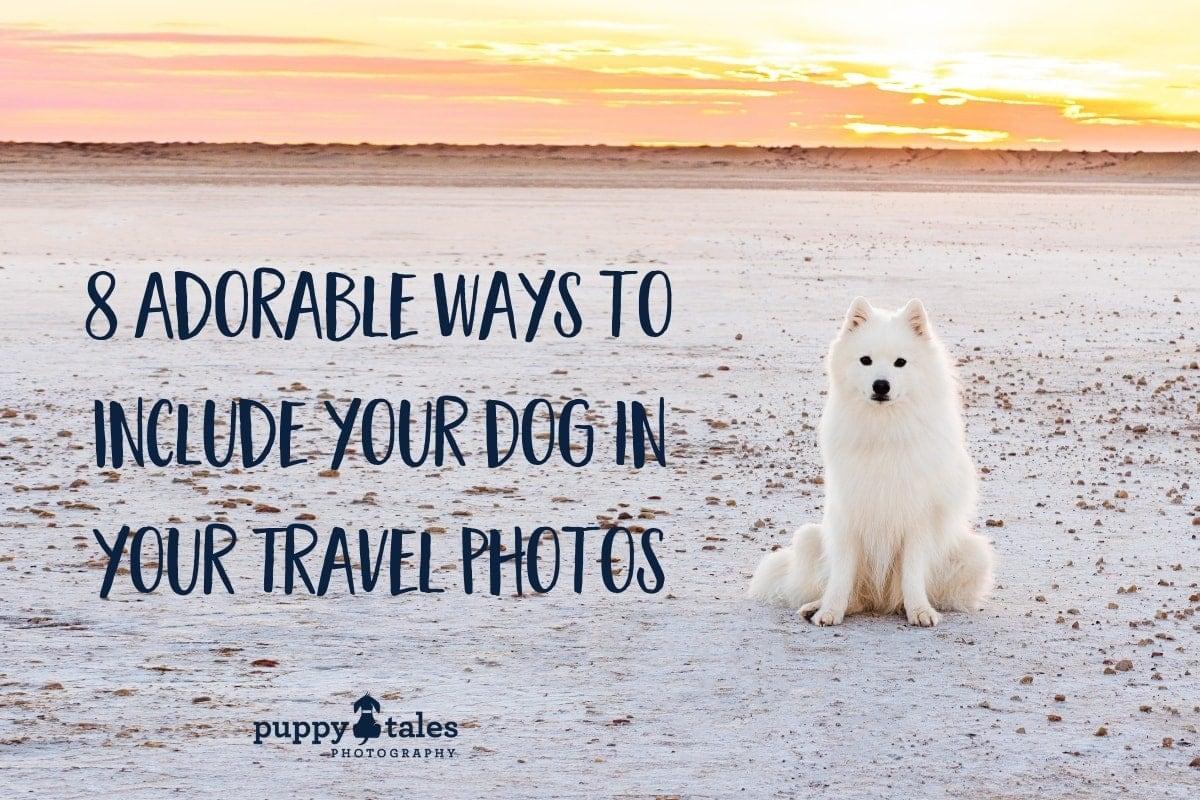 dog travel photos