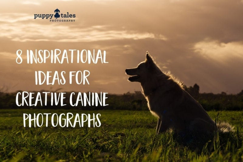 Puppy Tales Photography: Creative Dog Photo Ideas
