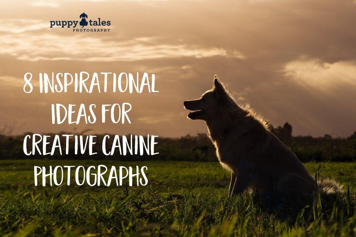 Puppy Tales Photography: Creative Dog Photo Ideas