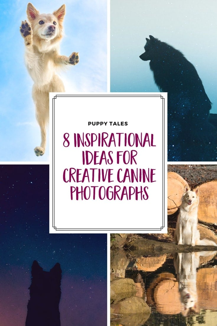 Creative Ideas for Creative Dog Photography