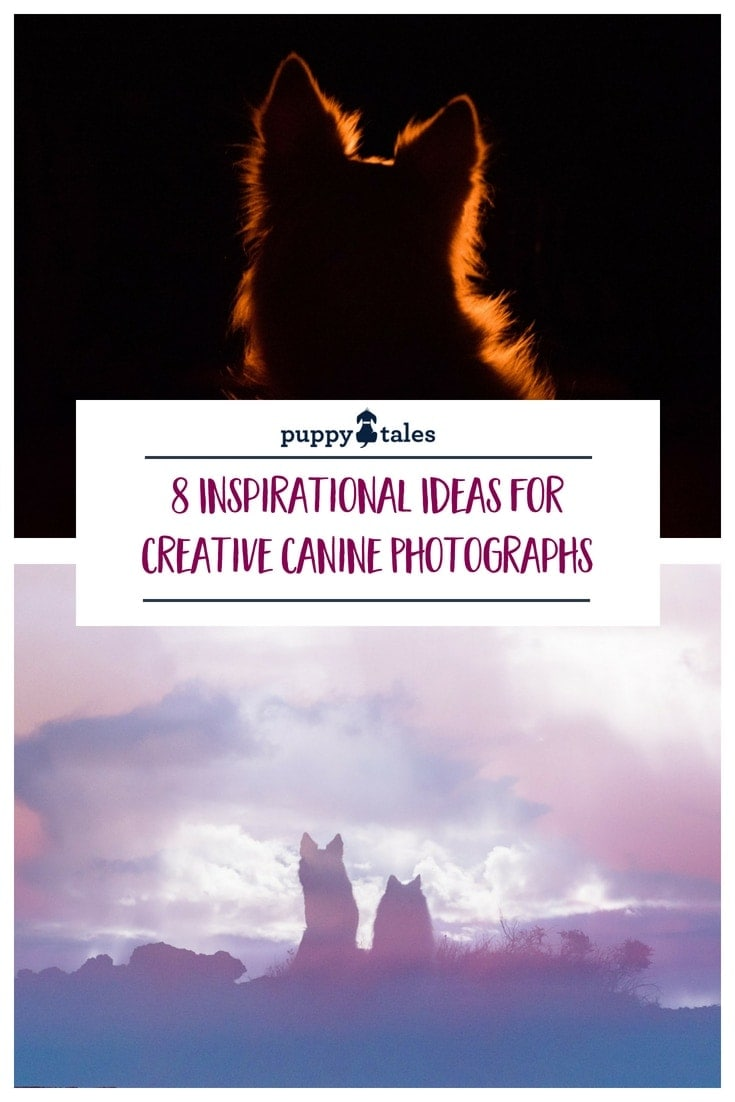 8 Inspirational Ideas for Creative Dog Photography