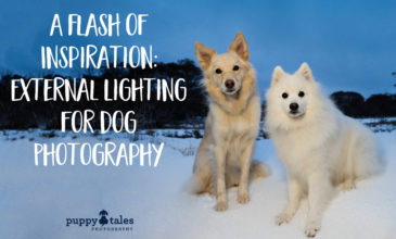 Puppy Tales Photography: External Lighting for Dog Photography