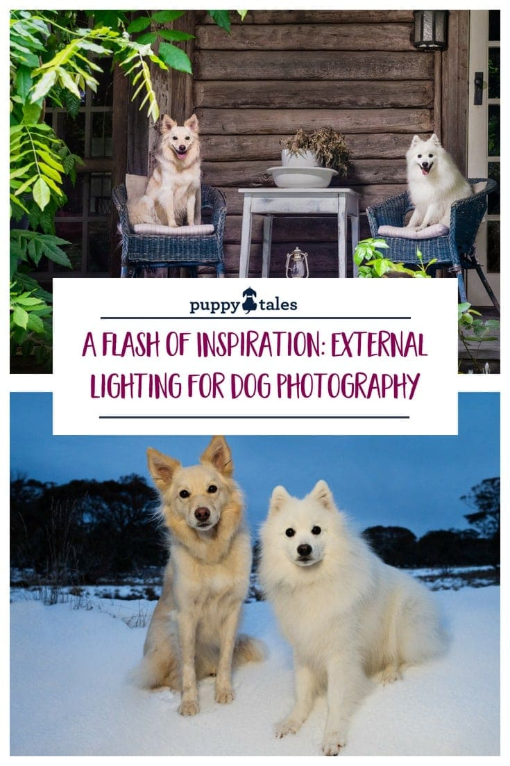 Puppy Tales Photography - A Flash of Inspiration: Using External Lighting for Dog Photography
