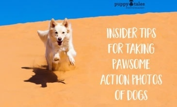 Puppy Tales Photography: Tips for Taking Pawsome Action Photos of Dogs