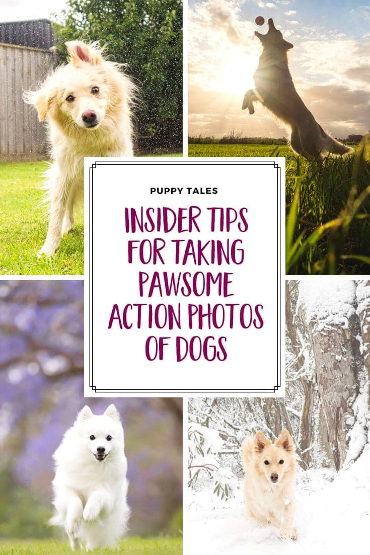 How to take action photos of dogs