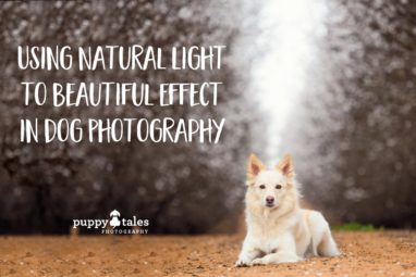 Puppy Tales Photography: Natural Light in Dog Photography
