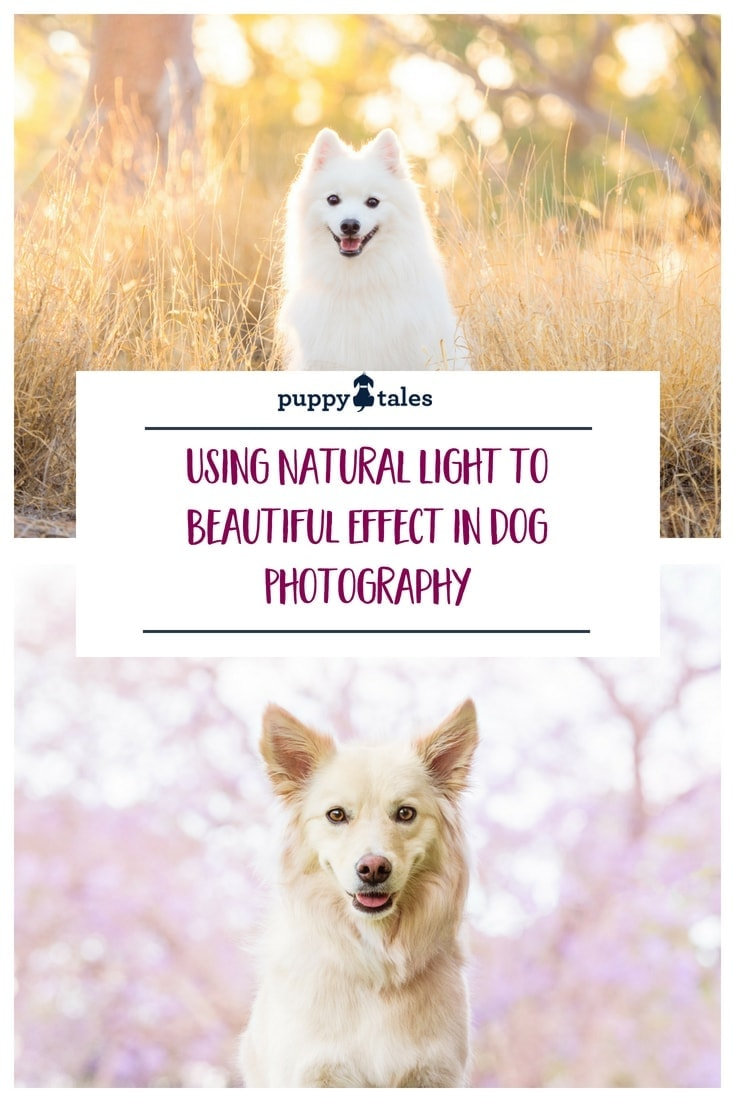 Natural lighting techniques when photographing dogs