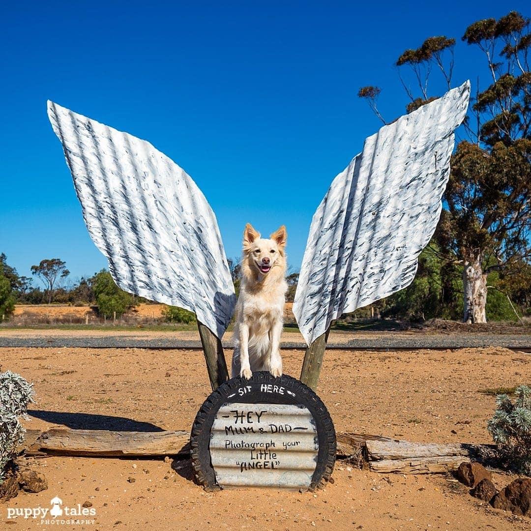 puppytalesphotography olympus photos 100