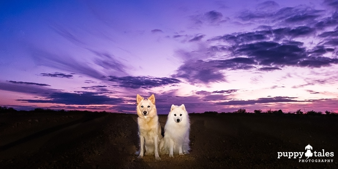 Two dogs photographed at sunset in Coober Pedy, South Australia
