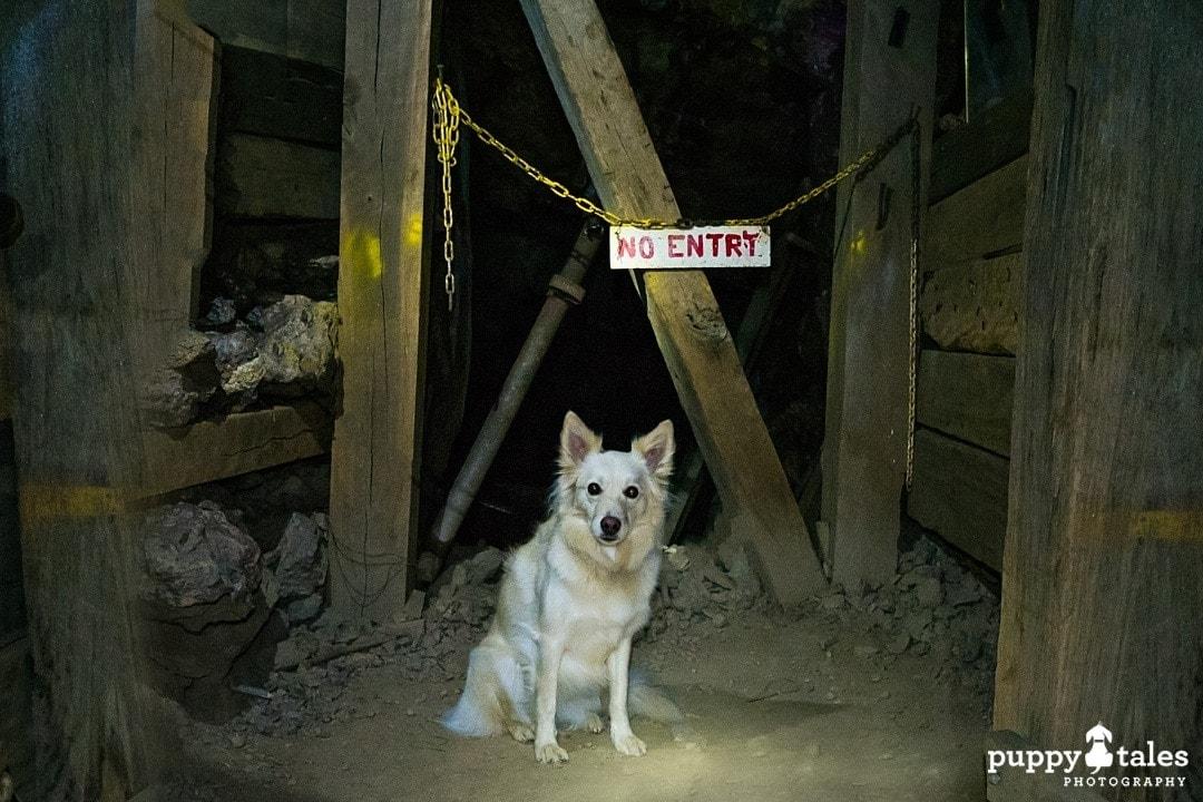 puppytalesphotography olympus photos 109