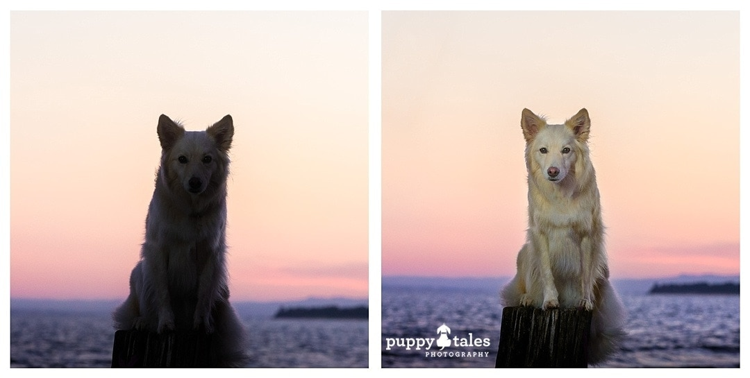 photographing a dog at sunrise without and with flash