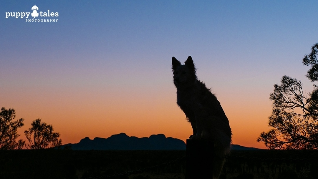 dog silhouette looking at sunset