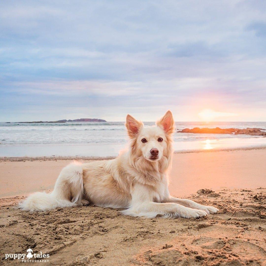 puppytalesphotography olympus photos 144