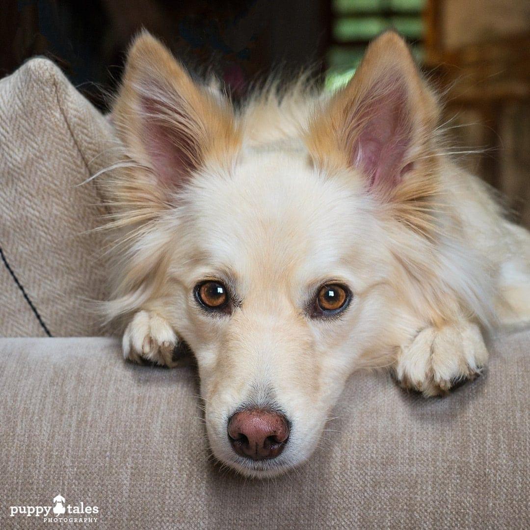 puppytalesphotography olympus photos 147