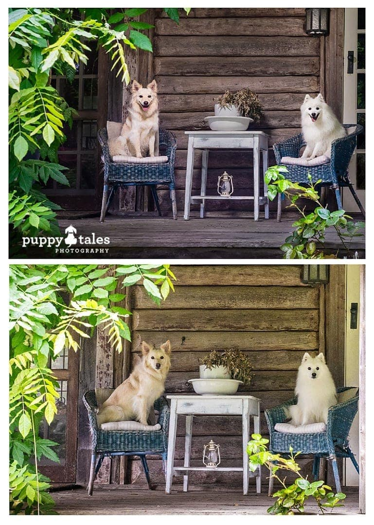 two dogs sitting on chairs captured with and without external lighting for comparison