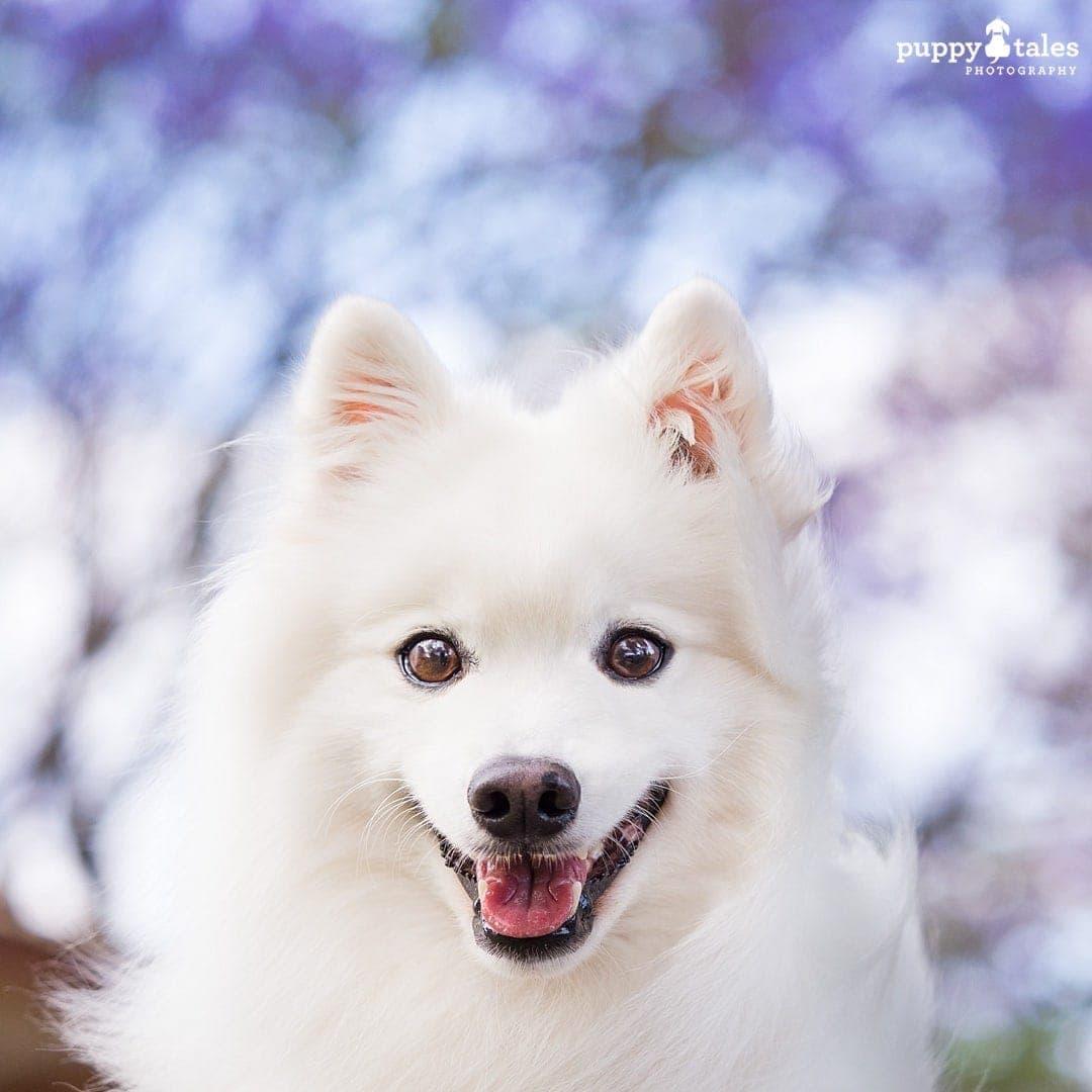 puppytalesphotography olympus photos 151