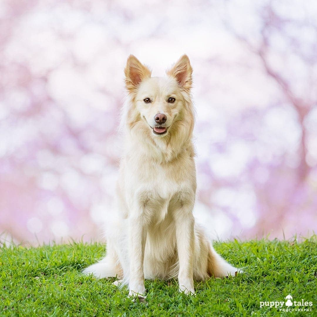 Border Collie dog sitting on grass with stunning bokeh background