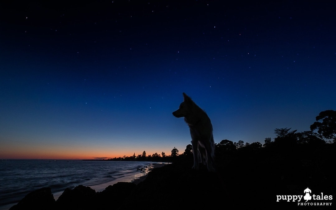 night sky and dog silhouette