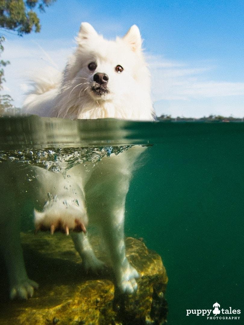 puppytalesphotography olympus photos 209
