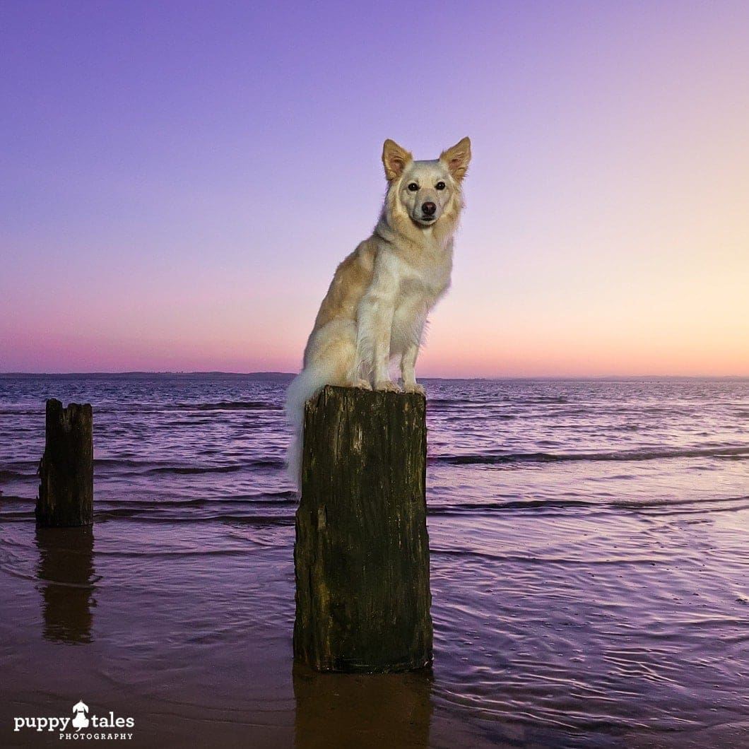 This beautiful sunrise photo of a dog was created through using external lighting and creative colour balance