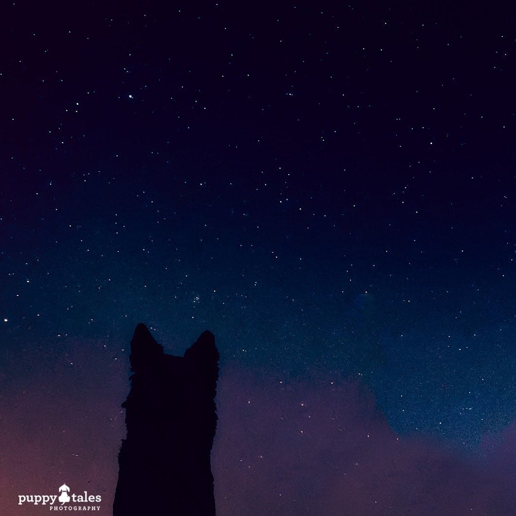 dog silhouette with a starry backdrop