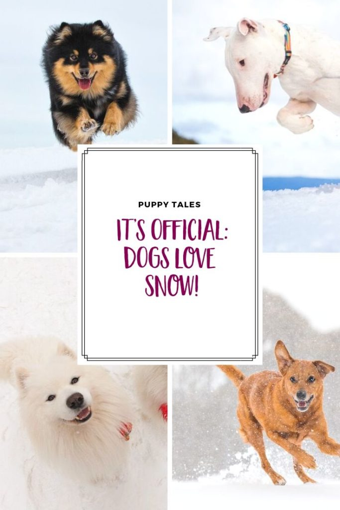 Reasons why dogs love snow