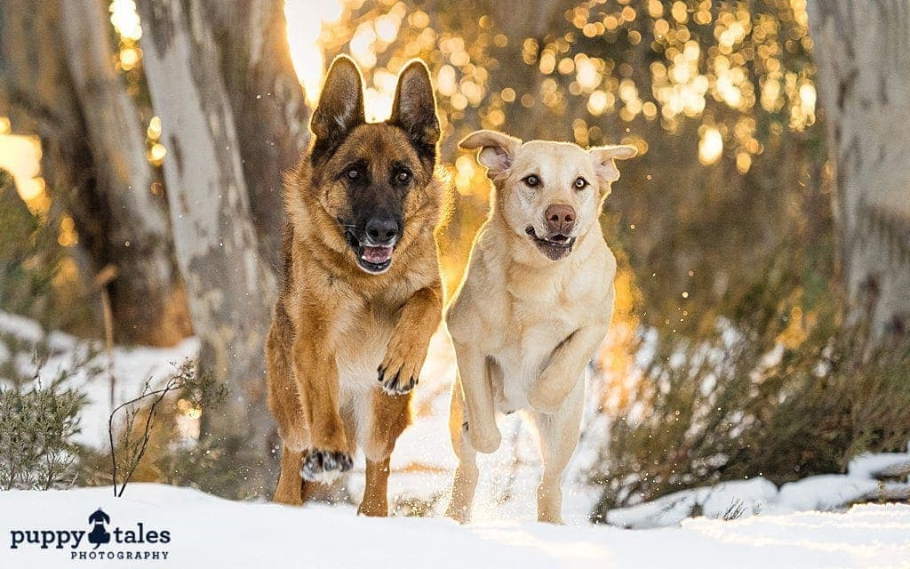 two dogs running alongside in snow