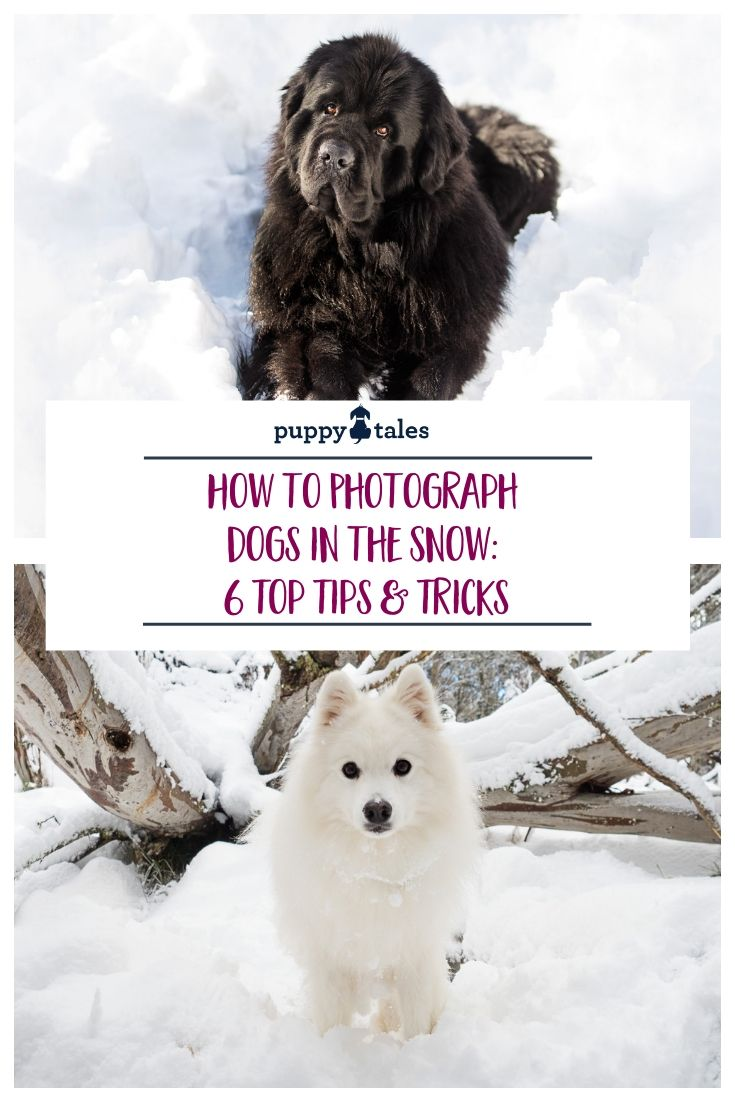 how to take dog photographs in the snow