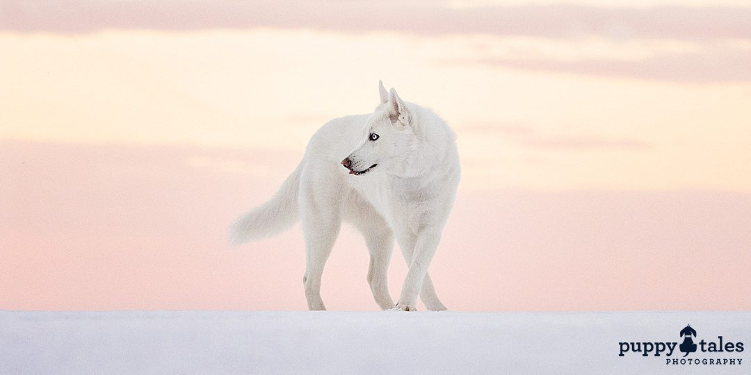 curious-looking white dog in a beautiful landscape