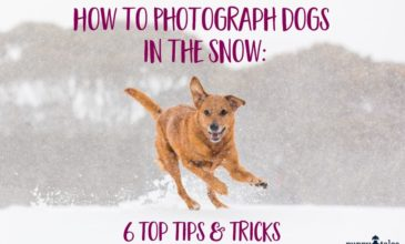 how to photograph dogs in the snow