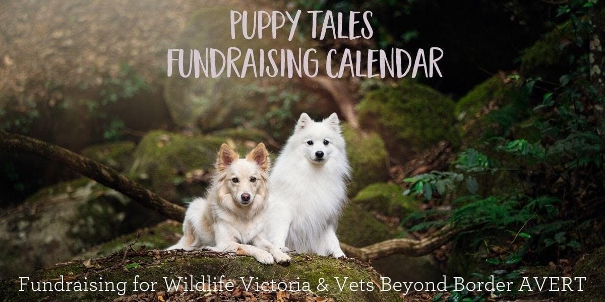 Blog A Fundraising Calendar