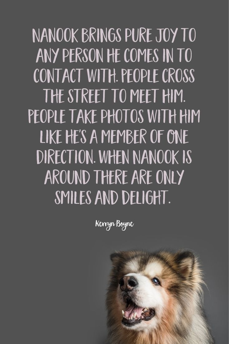 Nanook, the nine-year-old, long-haired Alaskan Malamute was photographed in Puppy Tales' Project Dogalogue. This is his human Kerryn's tale of life with Nanook.