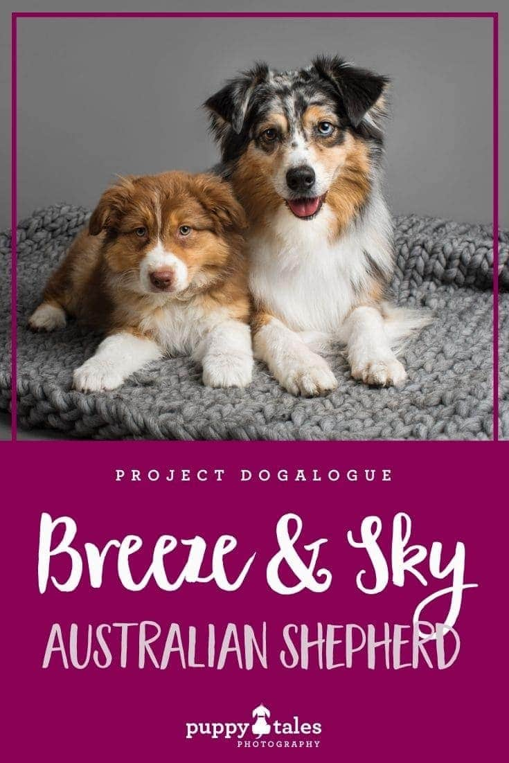 Breeze the blue merle and Sky the red-tri puppy are Australian Shepherds. They were photographed by Puppy Tales Photography for Project Dogalogue.