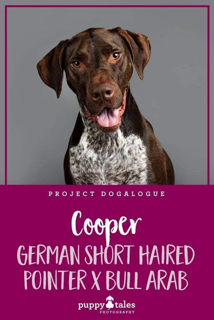 Cooper the four-year-old German Short Haired Pointer cross was photographed by Puppy Tales Photography for Project Dogalogue.